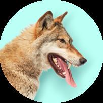 Предпринимай на всю голову — Волки