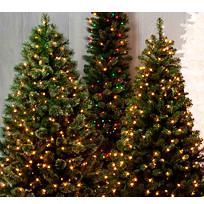 Натуральные елки